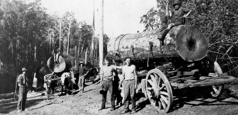 Yandina logging bullock wagons