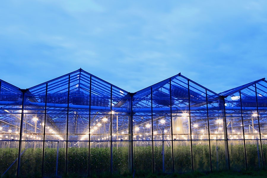 Greenhouses May Sprout